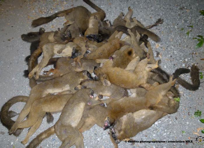 http://citoyennedestpierre.viabloga.com/images/Massacre_de_lemuriens_mai_2012.jpg